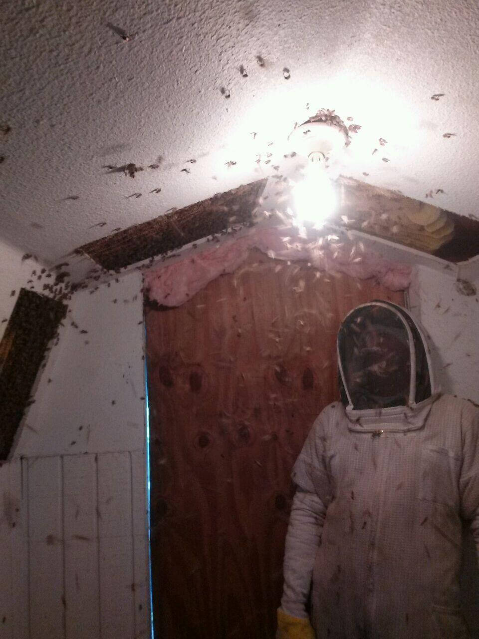 how to remove a bee hive