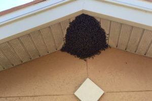 bee removal st petersburg