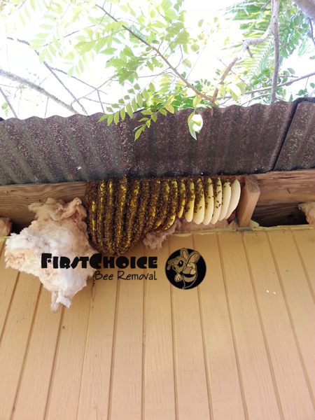 honey comb plates and bees under a metal roof