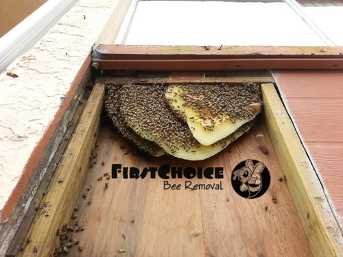 beehive and bees built a hive inside a wall