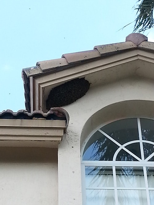 Bee removal miami