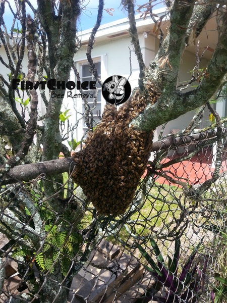 bee removal venice