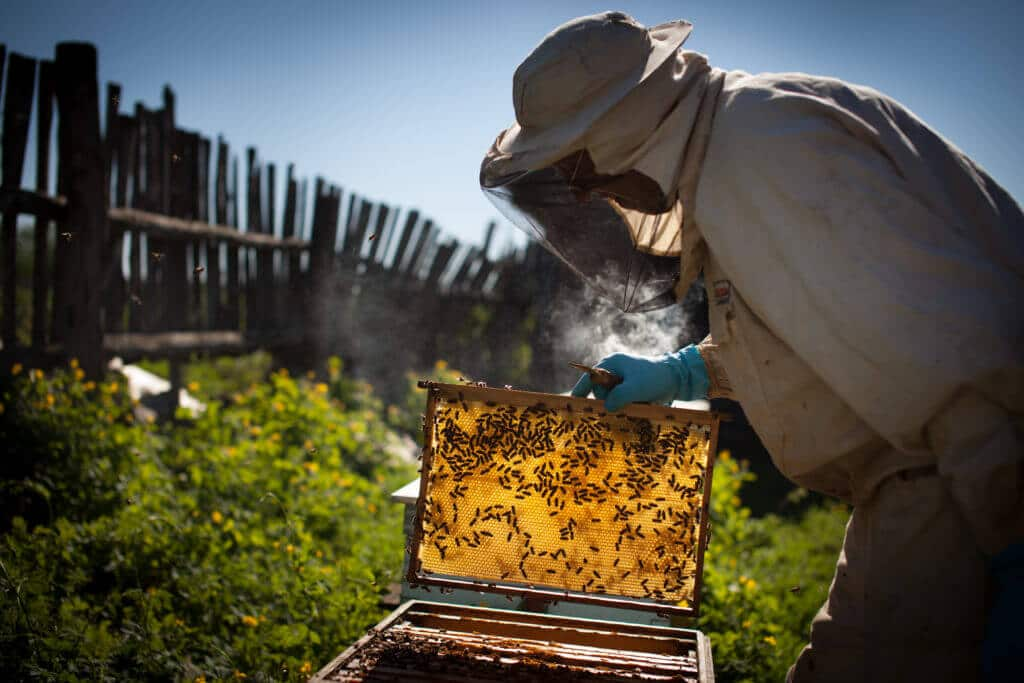 Beekeeper tending to his bee farm in Sarasota County Florida