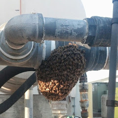 bee swarm landed on pool equipment