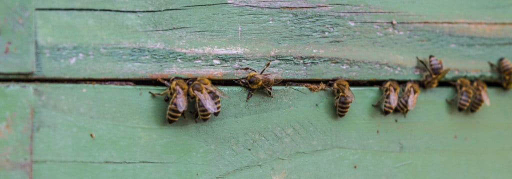 honey bee activity at a bee farm