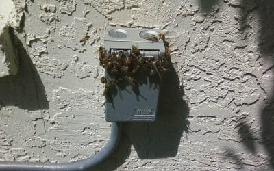 Bees in the Wall
