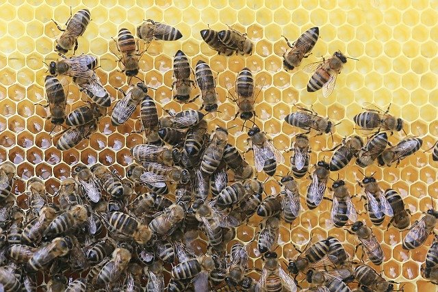 bee removal Ann Arbor