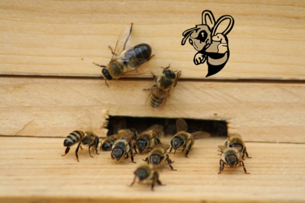 bee removal port charlotte