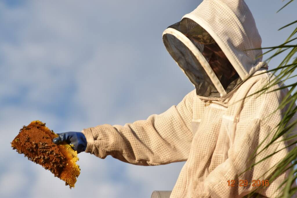 bee removal ft myers