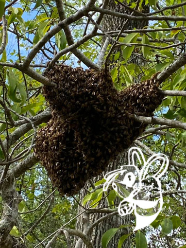 bee removal scottsdale