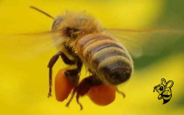 bee removal north port