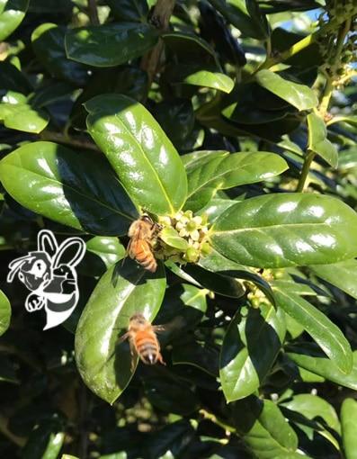 bee removal st petersburg