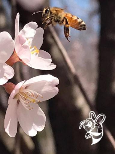 bee removal sarasota